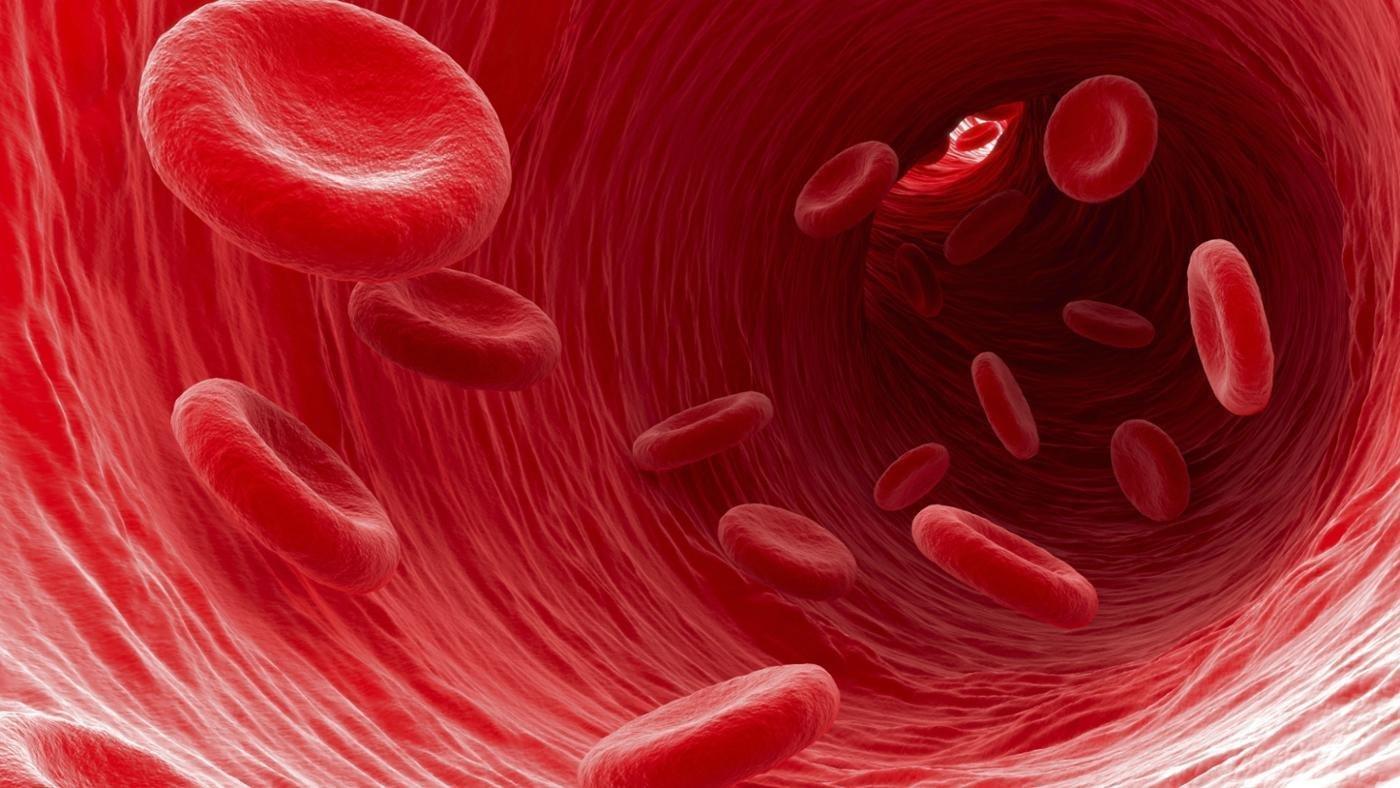 Ученые открыли новые типы клеток крови человека