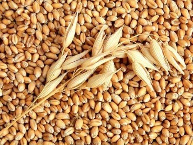 Дворкович уверен, что Российская Федерация останется лидером поэкспорту зерна