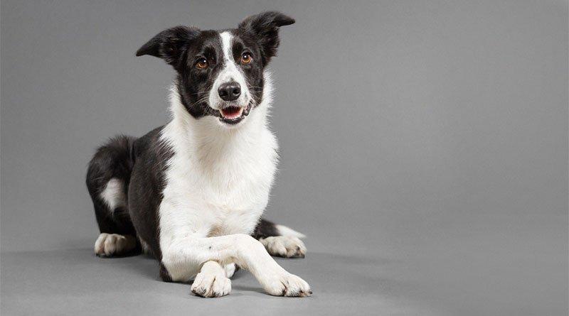 Собачья телепатия: ученые узнали, что собаки умеют читать мысли людей