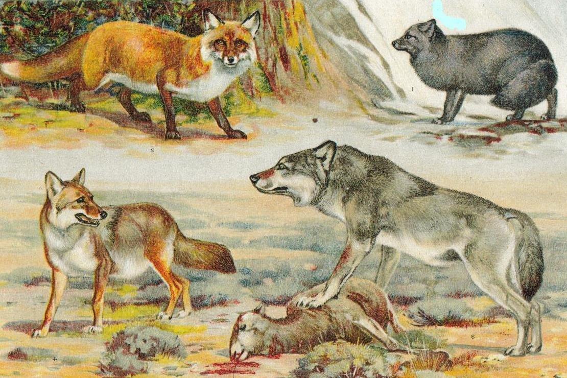 Дошли дообщего предка: ученые составили древо эволюции пород собак