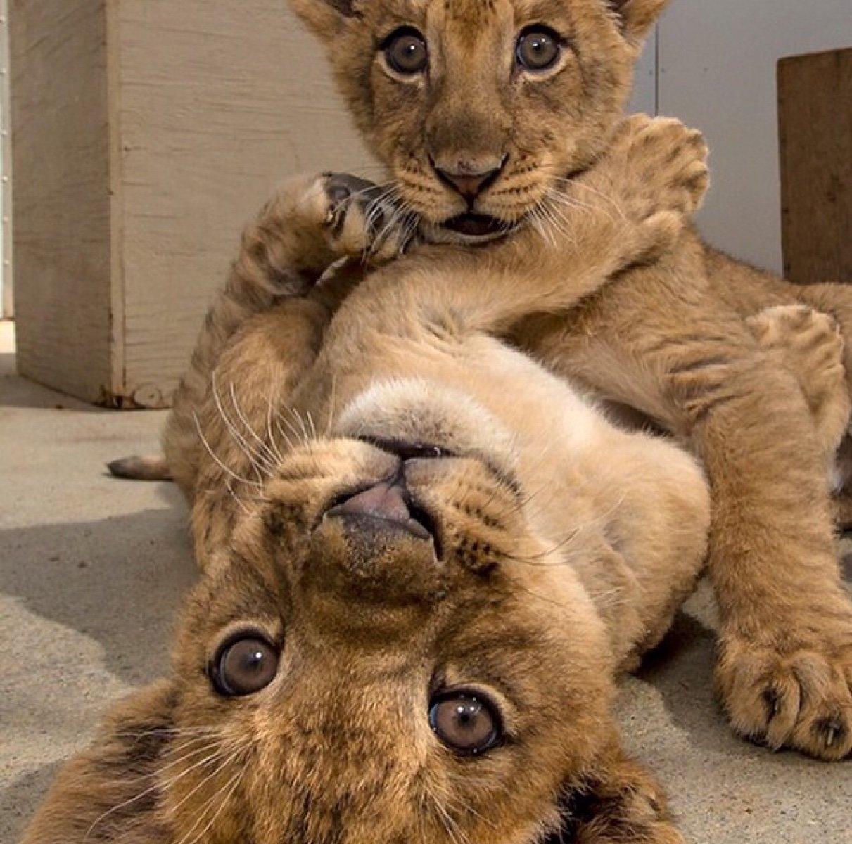 СКпредлагает через суд отобрать напавшего вЭнгельсе наподростка льва