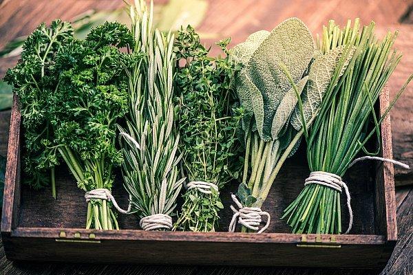 Основные правила для хранения свежей зелени