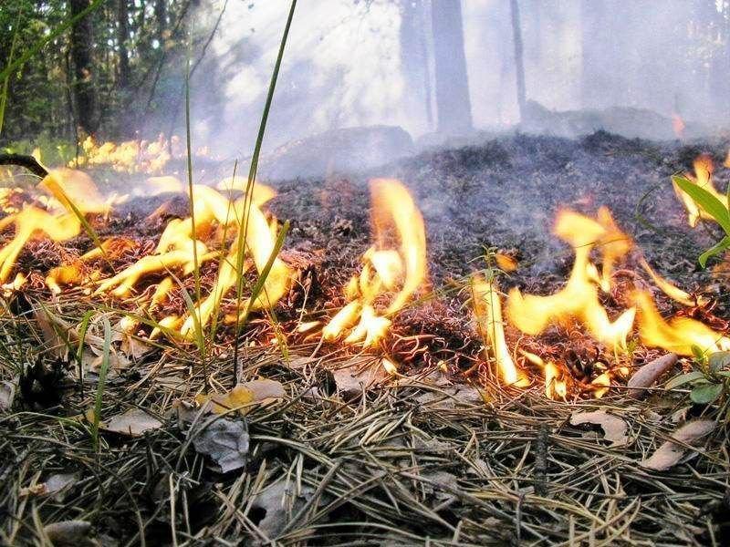 ВПензе установлен особый противопожарный режим