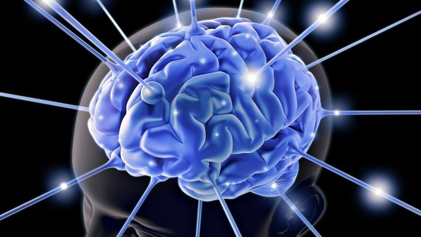 Ученые обнаружили «социальные сети» иммунных клеток
