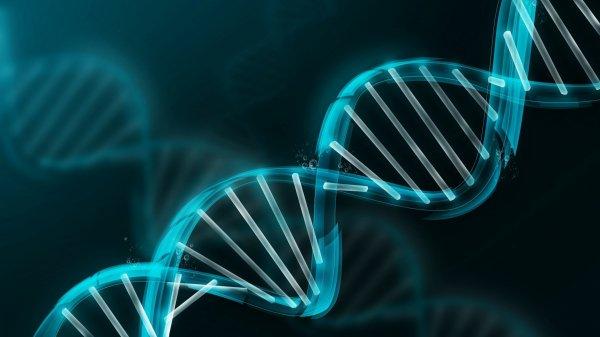 Найден простой способ перекодировать клетки человека
