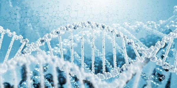 Ученые: Люди выбирают себе супругов с похожим ДНК-узором