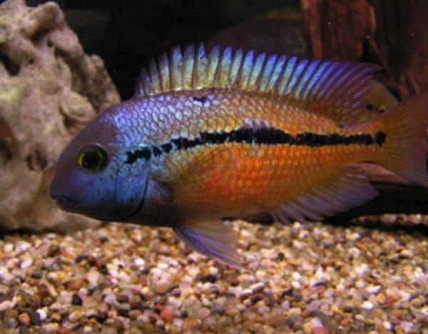 Рыбы умеют определять врагов – Ученые
