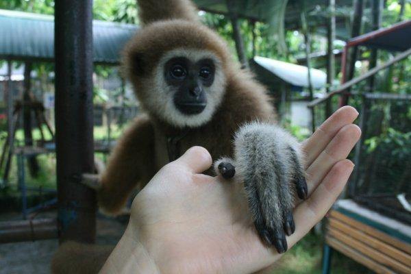 В Петербурге обезьяна из зоопарка отобрала телефон у посетителя и устроила съемку