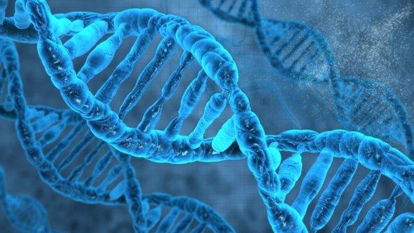 Учёные нашли ген, способный вылечить дерматит