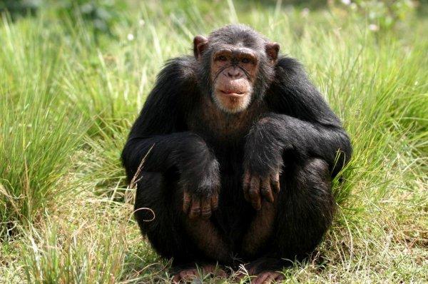 Ученые составили список самых умных животных в мире