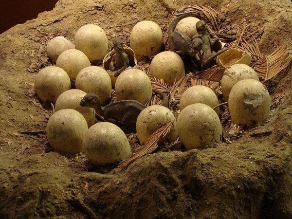 В Аргентине обнаружены яйца с целыми эмбрионами динозавров