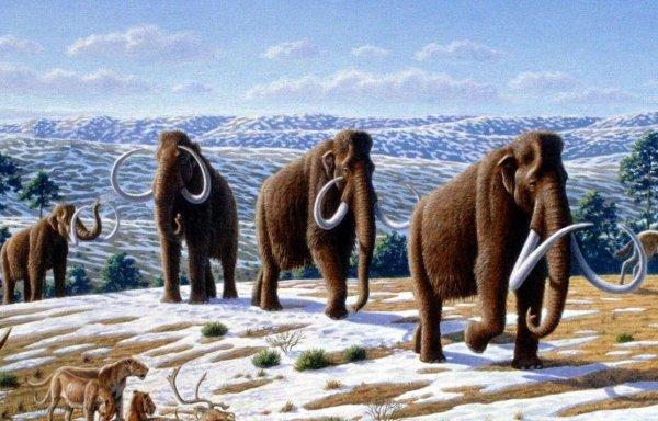 Российские ученые открыли правду о причинах вымирания мамонтов