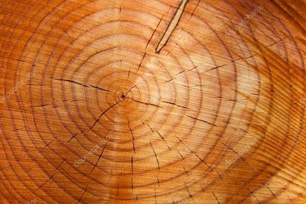 В Австралии растут самые древние деревья