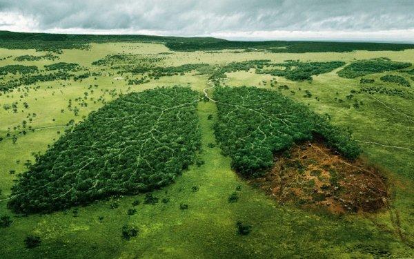 Биологи создали всемирную базу данных древесных пород