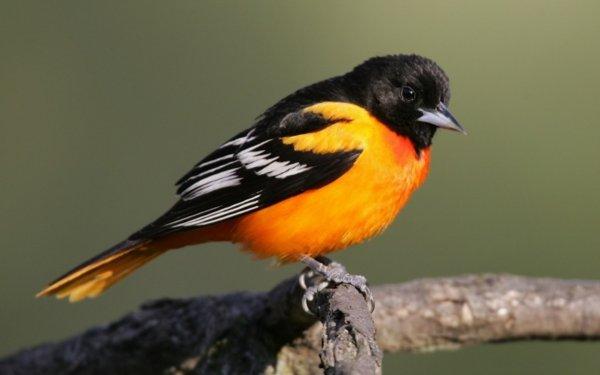 Исследователи: Самцы птиц читают поведение самок