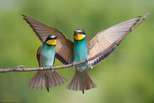 Ной Страйкер рассказал о том, где найти редкие виды птиц