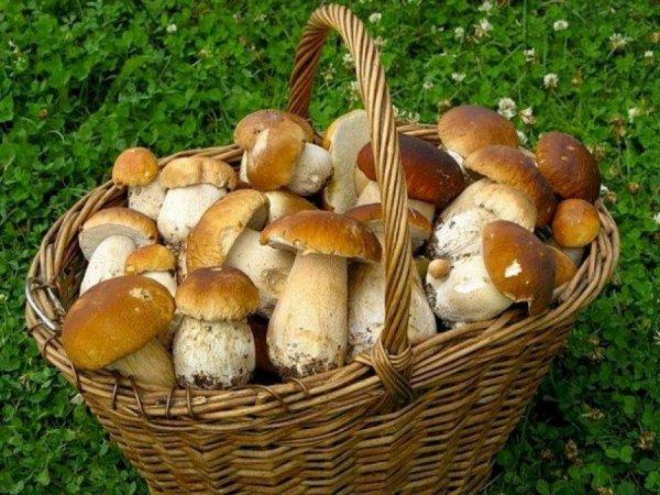 Ученые предположили, что грибы являются древнейшими существами в мире