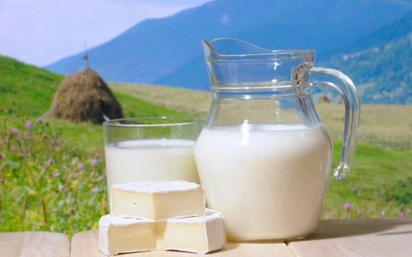 Ученые: В сыре и молоке находится ген устойчивости к антибиотикам