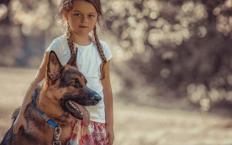 ВСочи возбудили дело против хозяйки собаки, которая напала наребенка