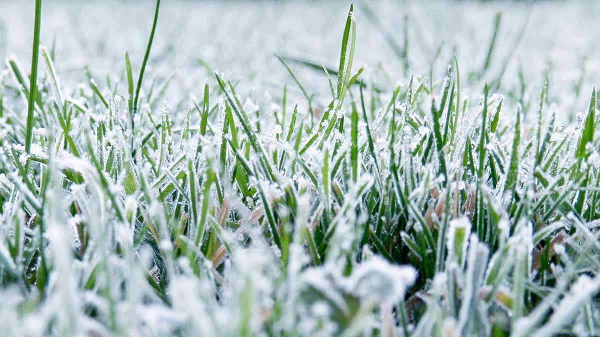 ВТомске стадион «Труд» на100% замело снегом