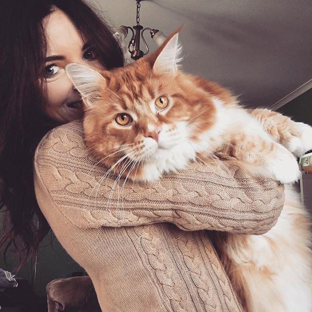 «Самый длинный вмире кот» желает, чтобы его оставили впокое