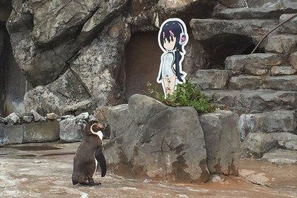 Любовь кгероине аниме помогла пингвину пережить предательство «бывшей»