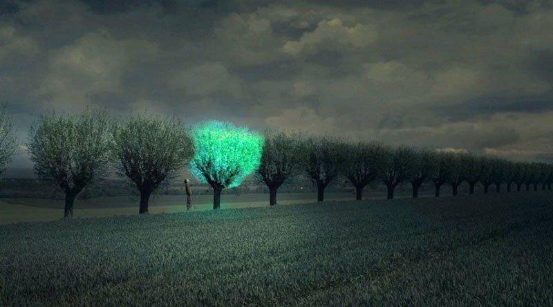 ВКитайской республике ученые создали растения, светящиеся втемноте