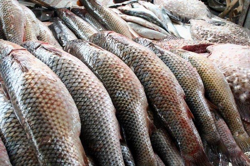ВТатарстане начнут разводить элитную рыбу