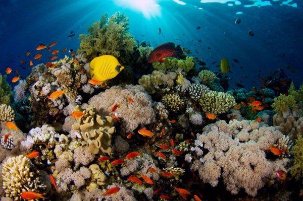 Ученые рассказали, как глобальное потепление влияет на выцветание кораллов