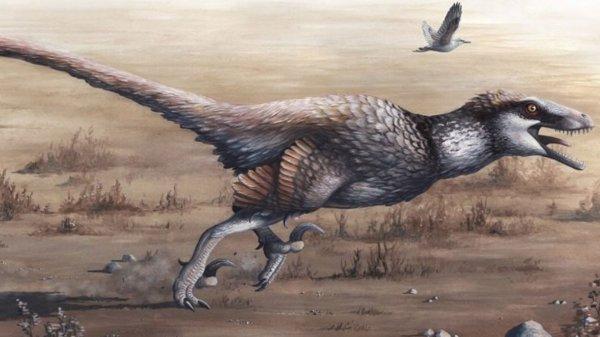 В Китае ученые нашли пернатого динозавра