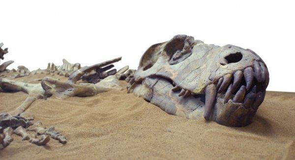 Палеонтологи из Петербурга открыли новый вид динозавров