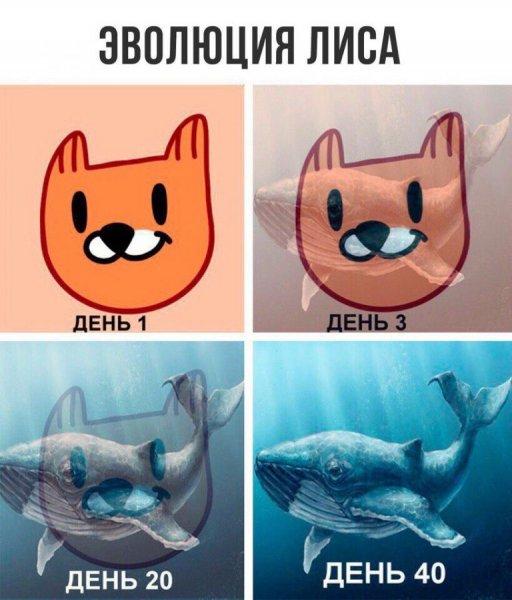 """Пользователи """"ВКонтакте"""" сравнили стикеры """"Лис"""" со смертельной игрой """"Синий кит"""""""