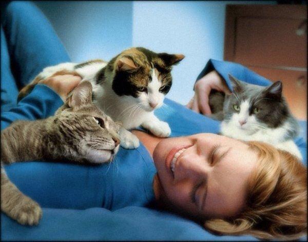 Ученым удалось разгадать тайные знаки кошек
