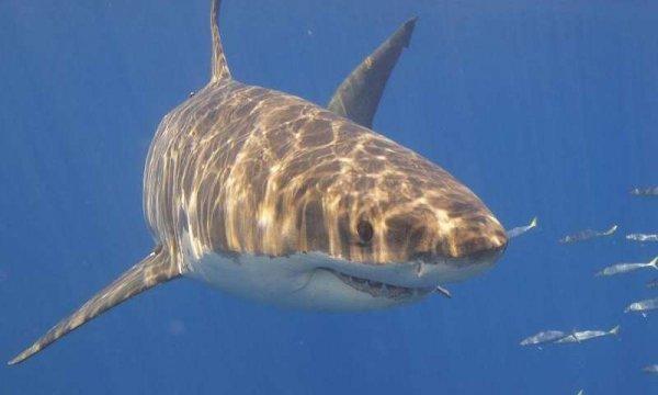 Ученые: Убийство акул может разрушить экосистему