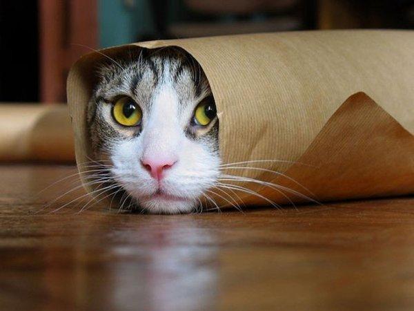 Коты продлевают жизнь человеку – Ученые