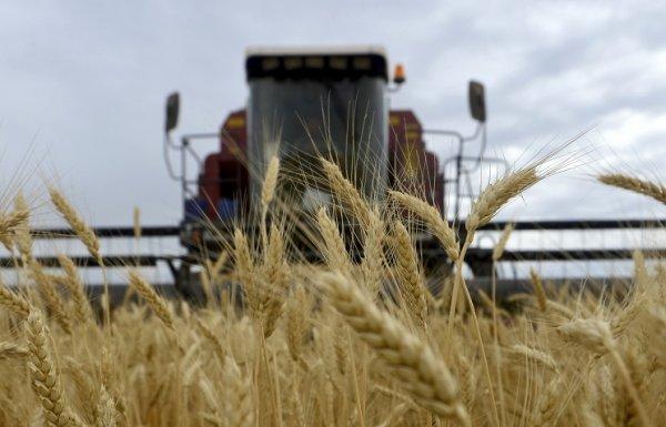 Турецкие импортеры выступают за прямые поставки зерна из России