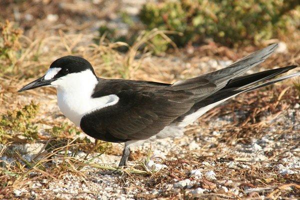 Ученые рассказали о причинах смерти морских птиц во время перелетов