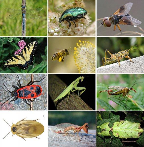 В МГУ изучили системы органов мелких насекомых