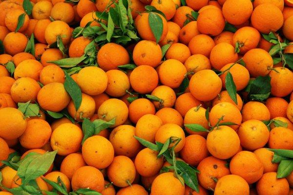 Ученые разработали препарат для защиты апельсинов от вирусов