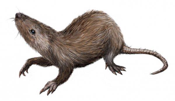 Российские ученые нашли останки неизвестного прежде млекопитающего