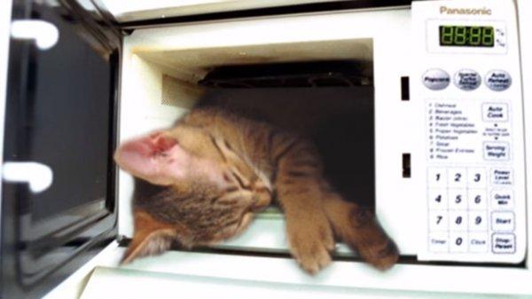 В США женщина убила кота в микроволновке и подала иск на разработчиков