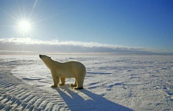 Ученые из РФ создали морозоустойчивые полимерные материалы
