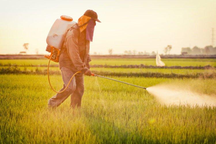 Ученые Пестициды разрушают репродуктивную функцию и снижают уровень IQ
