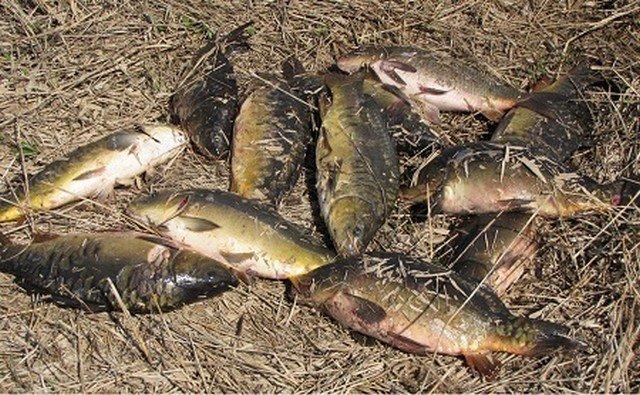 Нижегородским рыбакам могут запретить ловить неменее 5кг рыбы всутки