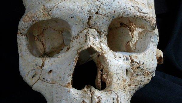 Натерритории парка Сосновка вПетербурге отыскали череп убитого мужчины
