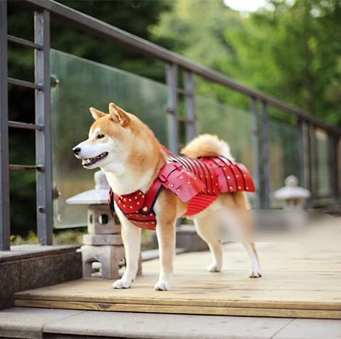 Японцы создали самурайские доспехи для домашних животных