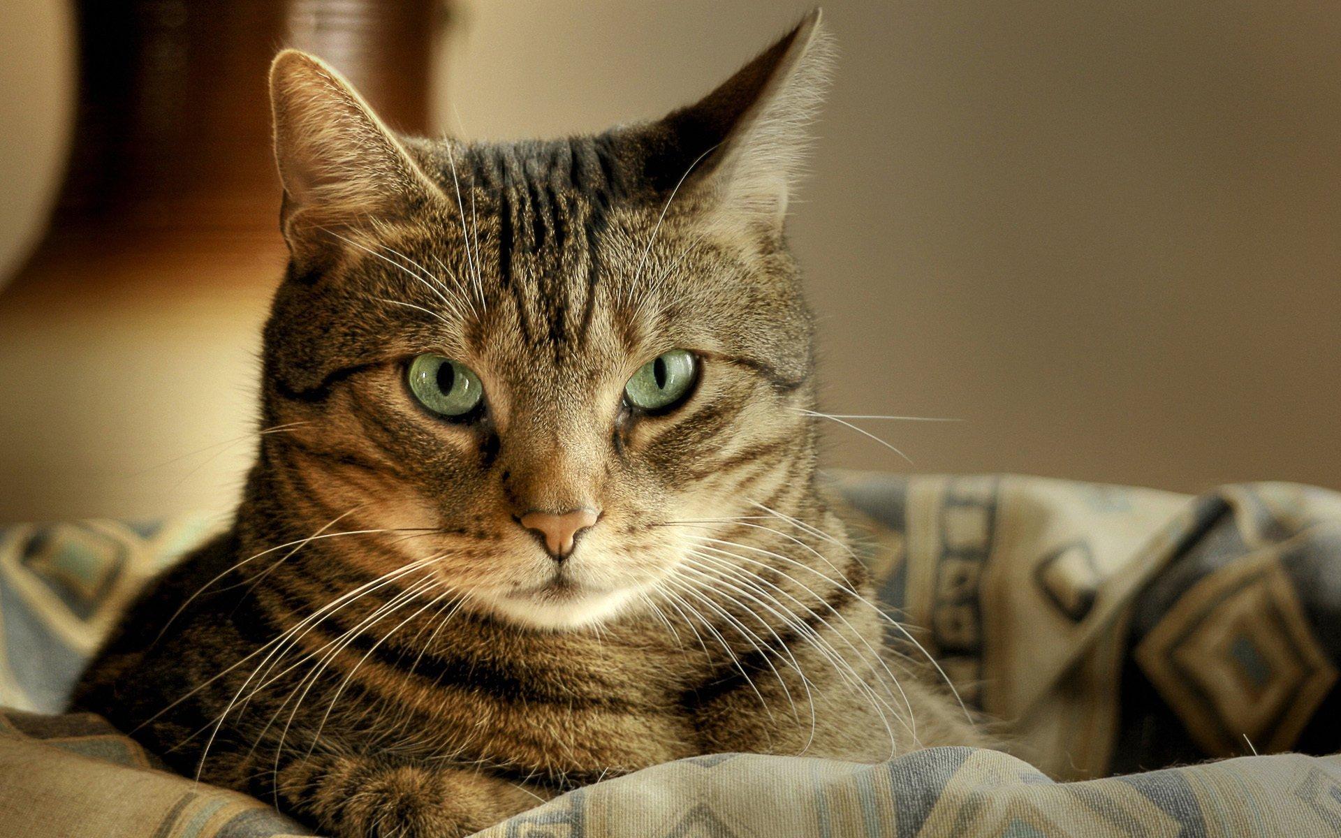 Христиане Испании убивали кошек ради меха