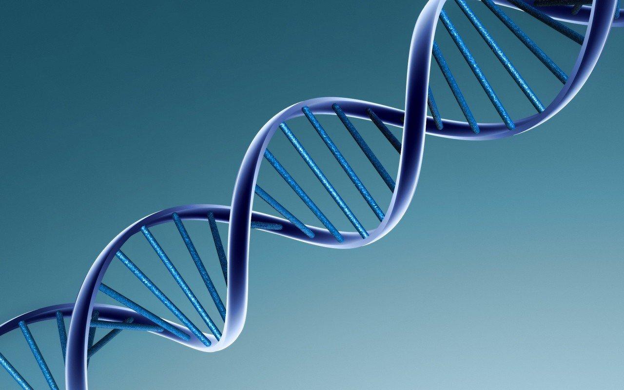 Ученым впервый раз удалось снять навидео процесс удвоения ДНК