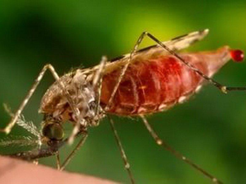 Комары под воздействием света теряют стремление кусать человека— Ученые