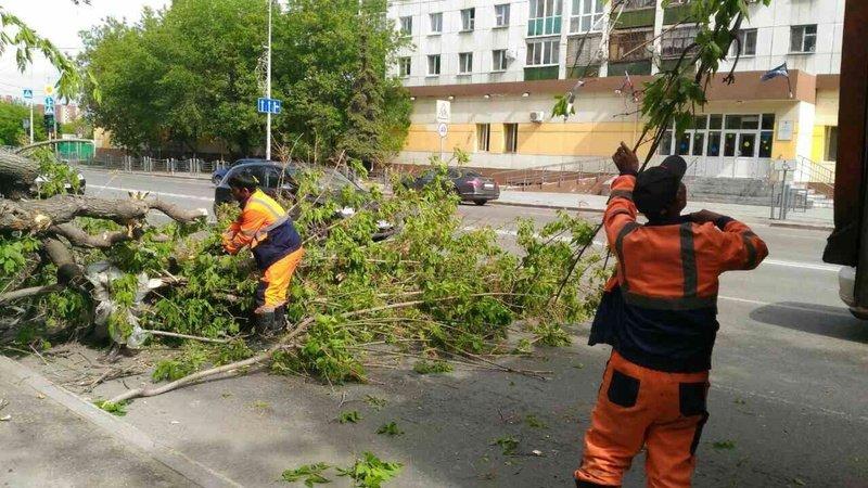Шторм вТюмени повалил неменее сотни деревьев изатопил улицы
